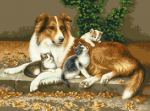 Ласи и котетата